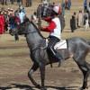Local Horse Races