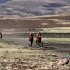 Local Horse Races (2)