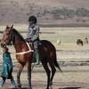 Local Horse Races (6)
